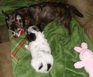Teena and Rosie at playtime