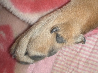rousou1-dog-paw-by